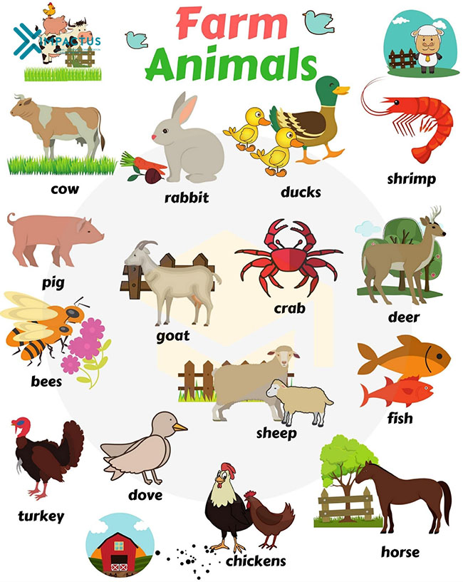 Từ vựng tiếng Anh con vật trong nông trại
