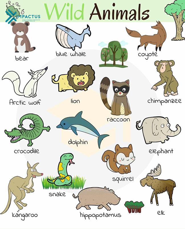 từ vựng tiếng anh về con vật có phiên âm