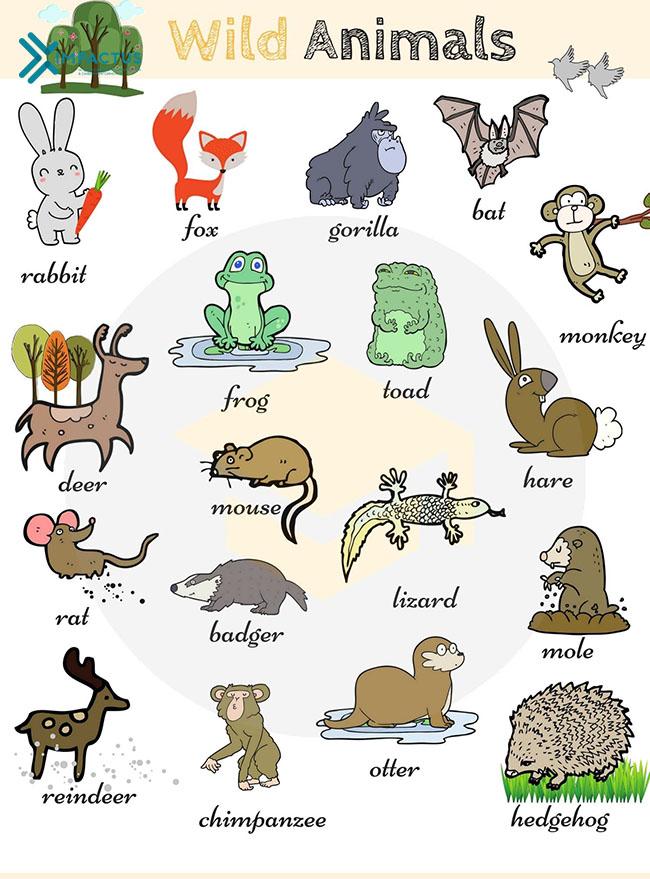Từ vựng tiếng Anh về động vật hoang dã