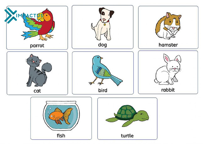 Từ vựng tiếng Anh con vật nuôi pets